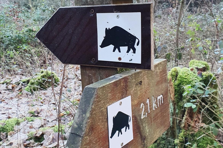 """Ausflugstipp """"Wildschweinroute"""" in Neu-Anspach"""